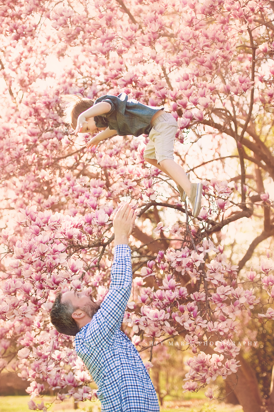 little boy being tossed in the air in the cherry blossoms