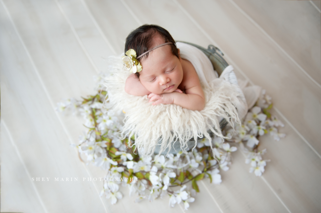 newborn baby girl in bucket with dogwood flowers